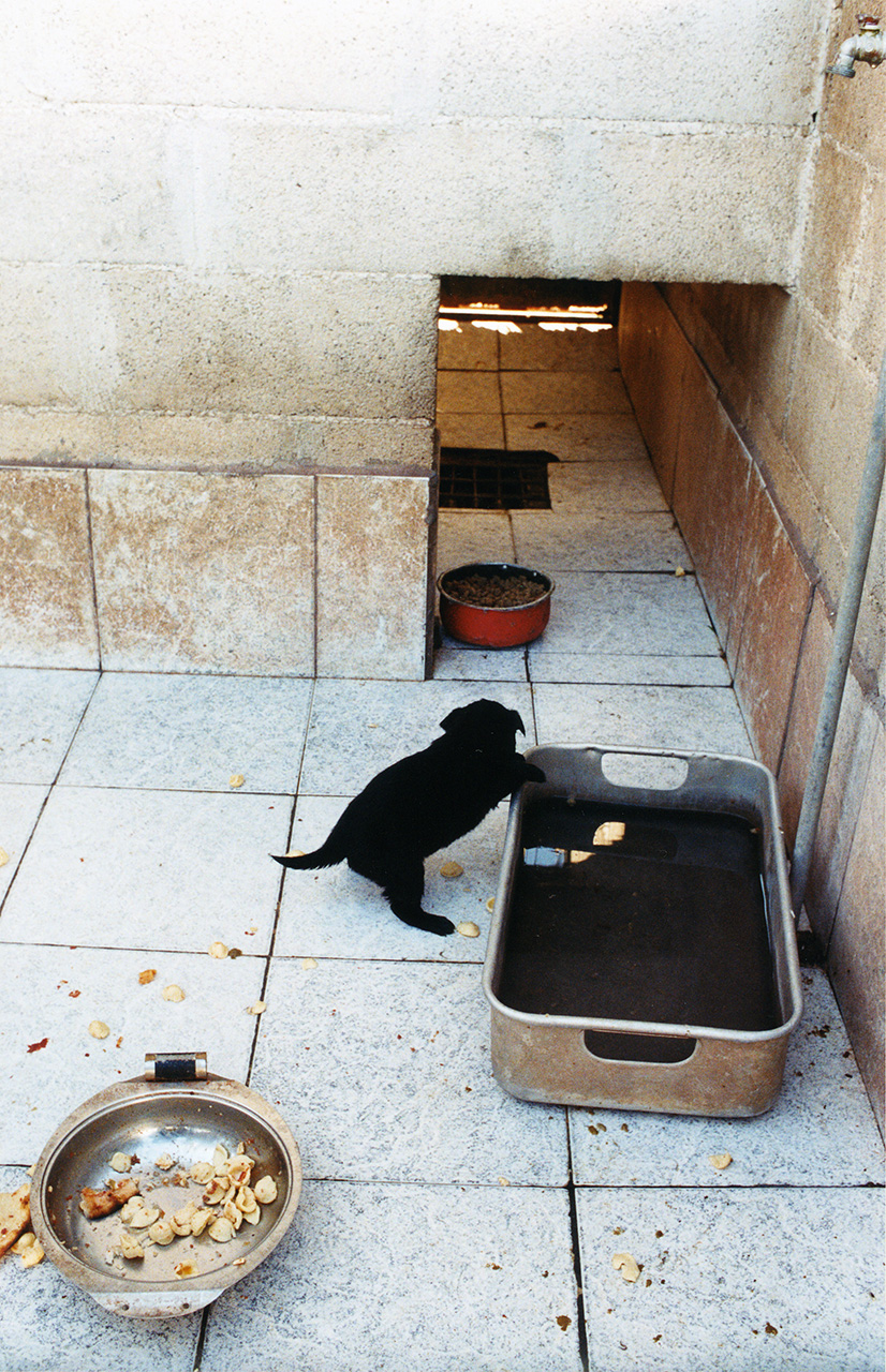 Canili: Stefano Cardone Photographer Reportage